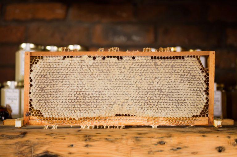 wax-bees